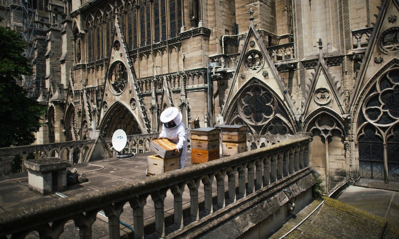 Bees on the roof of Notre Dame